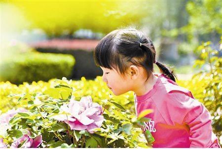 春天开的花有哪些?快给孩子科普一下吧!