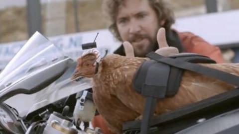 论鸡头的稳定性,你以为人家只是一只鸡?简直就是天然的稳定器