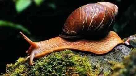 关于蜗牛的冷知识,它有2.5万颗牙齿
