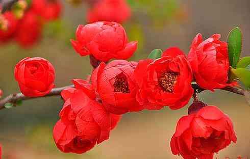 中国各省的省花分别是什么,看看你的省花属于哪一个