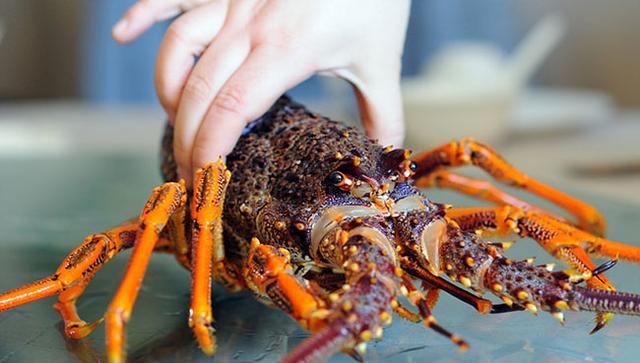 原汁原味澳洲大龙虾的家常做法