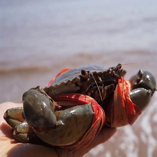 活螃蟹怎么保存才能活得时间久,这几个方法很实用