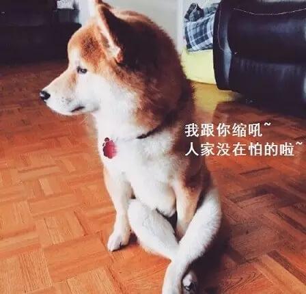 台湾人说什么话,大连话和台湾腔的魔性对比